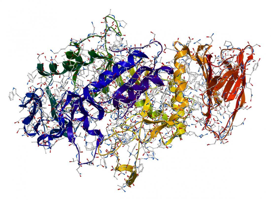 What are Enzymes Types of Enzymes and their Functions